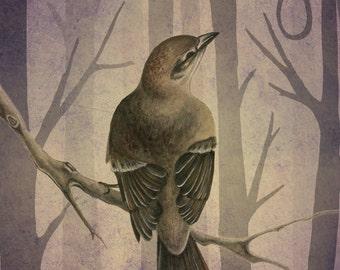 To Kill A Mockingbird Book Cover Illustration Print