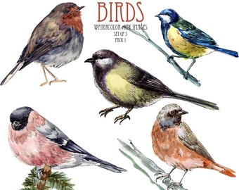 Birds clipart Robin clipart Watercolor clip art Bird clipart Watercolor bird