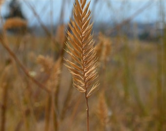 Stand Alone- grass, nature