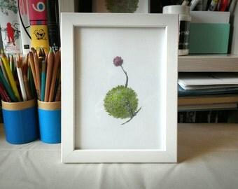 CharlieSteel Original Tree Drawing Series : Sphere