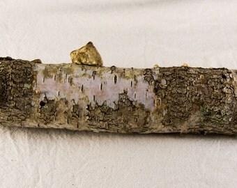 Birch Log, Wedding Table Log Centerpiece, Rustic Wedding Table Centerpiece, Birch Log with fungi, Rustic Centerpiece