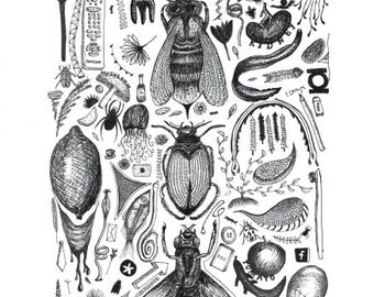 Bugs and other stuff- A3- Hand drawn illustration