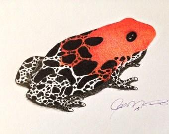 Red Back Frog