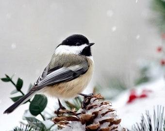 Winter Chickadee, Fine Art Photography, Chickadee Print, Wall Art, Photo Print, Bird Photography, Christmas Gift, Bird Art, Winter Decor