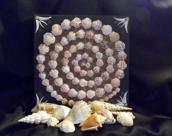 Large Seashell Mandala, Seashell Art, Mandala, Sanibel Pink Scallops, Sailor's Valentine, Spiral Seashell Mandala