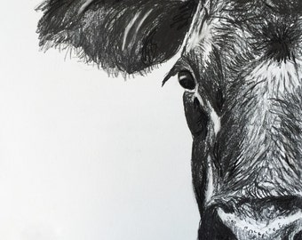 "charcoal sketch BLACK ANGUS  art Cow PRINT art cow artwork cow decor wall country western 8.5"" x 11"" size"