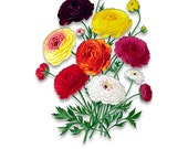 Vintage Flower Prints - Double French Ranunculus Bouquet - Wall Art - Collage Art - High Resolution - DIY - No Background - Clipart  - A275
