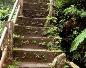 Lombok Stairs - 5x7 photo in 8x10 mat, fine art photograph, indonesia photography, lombok photography, home decor, wall art, jungle photo