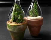 Dollhouse Miniature Terrarium Set: Potted Plants Cloche Bell Jar
