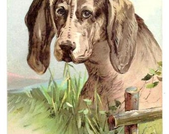 1907 - SPANIEL Dog PORTRAIT-  Beautiful Vintage Embossed designed POSTCARD - Date pencil written at the back - very good & fresh condition,