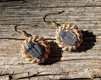 real trilobite fossils centered on vintage gold braid earrings  - 697