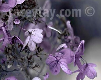 Purple and Gray Wall Art, Flower Photography, Hydrangea, Pastel Bedroom Decor, Powder Room Art