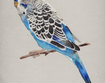 Blue Parakeet Print - Budgie Art - Bird Watercolor Painting - Giclee Print - Canvas
