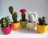 Cactus, Plant, Home Decor, Gift, Needle Felted, Set of 5