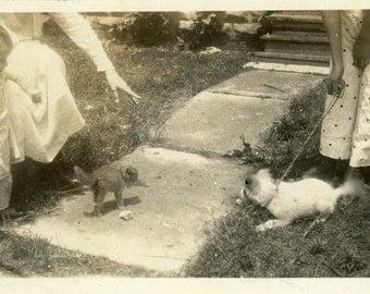 "Vintage Photo ""Cat vs. Dog"" Snapshot Photo Old Antique Photo Black & White Photograph Found Photo Paper Ephemera Vernacular - 156"