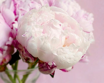 Pink and White Peonies Photo Notecard