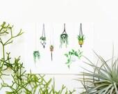 Hanging Plants 8x10 Art Print - Macrame Succulents and Cactus Giclée Print