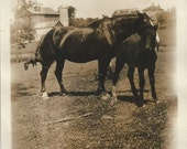 RESERVED FOR A - Tenderness and Duty - Antique 1910s Mare and Foal Sepia-toned Photograph