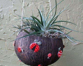 LadyBug Coconut Air Plant Holder with Plant-CUTE
