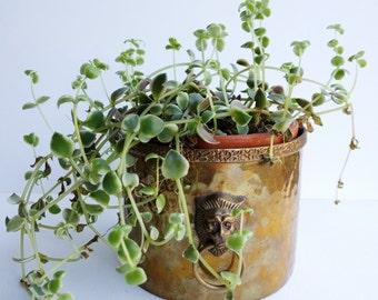 Brass Planter - lion urn