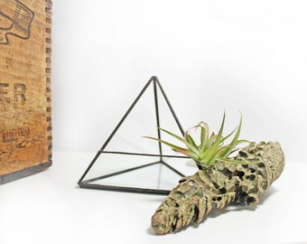 Small Triangle Terrarium Container / Glass Terrarium as Air Plant Holder