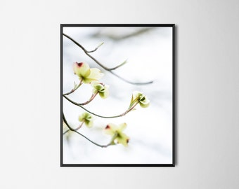 "Dogwood Art, White Flower Art, White Green Print, White Dogwood Wall Decor, Flower Photography, White Flower Art, Dogwood Tree - ""Budding"""