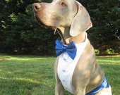Dog Tuxedo Shirt/Formal Attire