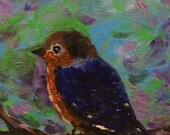 Sweet Baby Bluebird