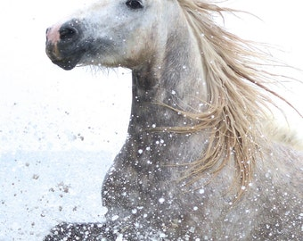 Wild Horse Photography - White Horse Splash, White Horse Art, White Horse Photography, Horse Art, Wild Horse Decor,  White Horse Photography