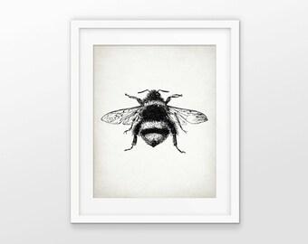 Bumble Bee Print - Bee Illustration - Bee Art - Bees - Entomology - Digital Art - Printable Art - Single Print #1601 - INSTANT DOWNLOAD