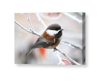 Chickadee Canvas, Bird Canvas, Bird Wall Art, Bird Photography, Winter Art, Nature Canvas, Gallery Wall Art, Nature Wall Art, Song Bird