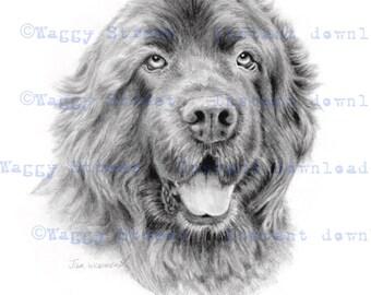Instant download Newfoundland dog from original graphite pencil drawing. Wall art decor. Newfoundland poster. Newfy art. Dog clipart
