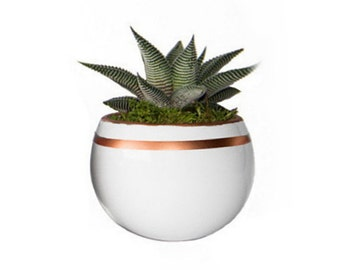 """Magnetized Luxe Planter with Live Plant - 3 x 3 x 5"""" - White Stripe"""