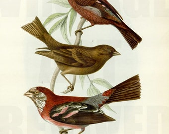 Collection of Birds on Tree Branch Graphic - High Resolution Digital Download No.702