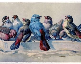 Vintage Birds Vintage Downloadable, Printable Digital Wall Art Image Instant Download