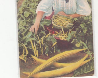 Charming Girl W Straw Hat Picking Yellow Beans Advertising Postcard 1910 Great Northern Seed Co