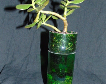 Jameson bottle Planter (with jade plant)