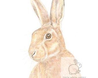 Hare Blank Card