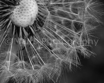 Black & White Glistening Sparkle Patterns Abstract Dandelion Seeds Garden, Fine Art Photography, matted and signed 8x10 Original Photograph
