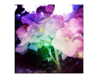 Large Photography Print, 20x20 Art, Purple Wall Decor, Purple Flower Photography, Large Square Art, Experimental Wall Art