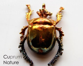 Copper covered scarabee real bug beetle pendant / real beetle scarab copper plated as a trailer