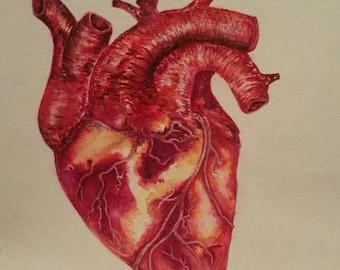 Anatomical heart original watercolor painting