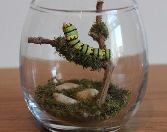 Real Woodland Caterpillar Terrarium - Black Swallowtail Caterpillar. Handmade, Ornamental Gift ~