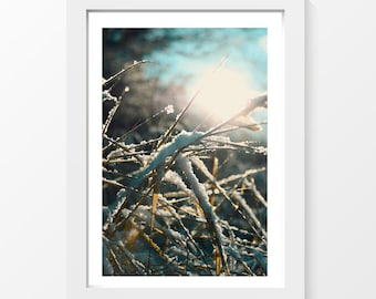 "Beautiful Snow / Shiny snow weed grass sun winter blue photo printable downloadable wall art home decor to print yourself / A3 and 11""x17"""