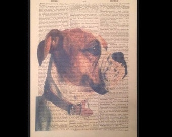 Vintage American Bulldog Dog Print Dictionary Page Wall Art Picture Pet Animal Funky Cool Quirky
