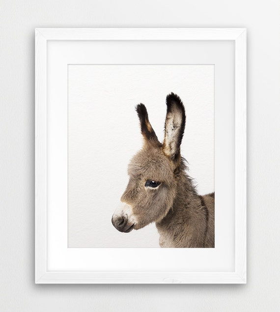 Donkey Print Farm Animal Wall Art Baby Donkey Foal Animal