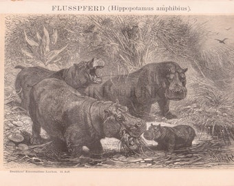 """Shop """"hippo"""" in Prints"""