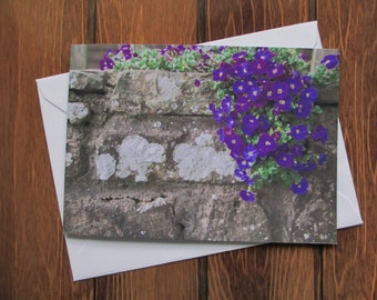 Flower Greetings card C5 - Aubretia