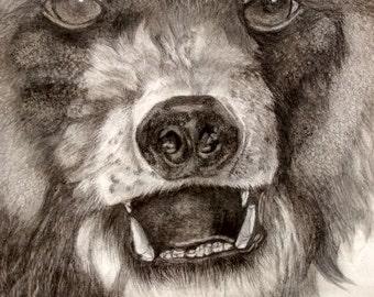 grizzley bear portrait in graphite, 16x12