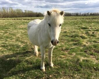 Horse Shoe, Icelandic horse shoe, pony shoe, Iceland souvenir, Icelandic horse, Icelandic pony, Icelandic pony shoe, Icelandic horses,